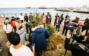 Tree planting in Ushuaia