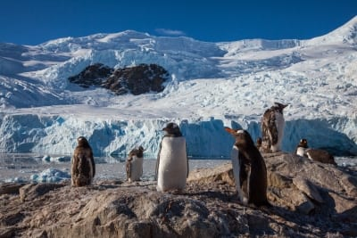Antarctica Expedition Wildlife